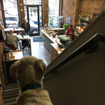 Franklin at dog-friendly Urbana